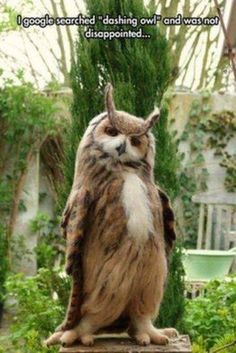 "I will see you your ""adorable kitty,"" and raise you one ""dashing owl."" Check and mate."
