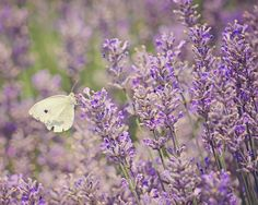 Copyright of Katie Howell Lavender | Flickr - Photo Sharing!