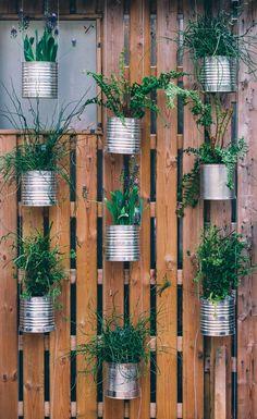 Tin can planter inspiration