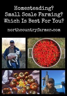 Homesteading or Small Scale Farming, Which is Right For You
