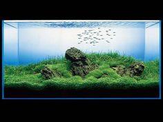 Aquarium Care for Freshwater Fish Aquascaping, Aquarium Aquascape, Aquarium Garden, Aquarium Landscape, Aquarium Setup, Nature Aquarium, Aquarium Design, Planted Aquarium, Saltwater Tank