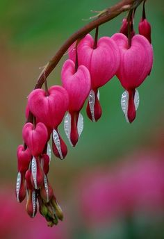 Heart Blooms. Heart-shaped flowers.