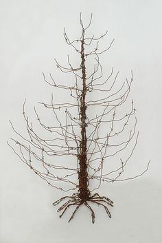 barbed wire tree