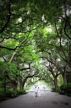 Destination wedding in Forsyth Park | Savannah, GA |  @visitSavannah #savannahphotographer www.dianedodd.com