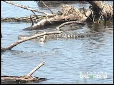 p9  What is a slough?  Take a look: Discover Oklahoma - Red Slough Wildlife Management Area