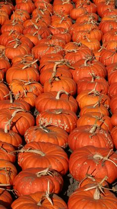 Looking for a whimsical heirloom pumpkin to bring some cozy cheer to your autumn front porch or fall pumpkin recipes? It's time to find a Cinderella Pumpkin! Edible Plants, Edible Garden, Planting Pumpkin Seeds, Pumpkin Bisque, Pumpkin Varieties, Pumpkin Seed Recipes, Cinderella Pumpkin, Toasted Pumpkin Seeds, Pumpkin Centerpieces