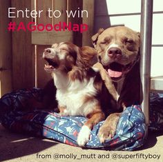We just LOVE #AGoodNap! Post a picture of your sweet sleeper and you'll be entered to win a molly mutt bed - size and design of your choice! #contest #petcontest #giveaway#dogsofinstagram #mollymutt #pillowpup #mykindofnap #abedoftheirown  Contest Rules: 1. Must be following @superfiftyboy and @molly_mutt 2. Post your napping photo and in your caption please write: This is my entry for #AGoodNap giveaway from #mollymutt. Visit @molly_mutt or @superfiftyboy for contest details.  4. Contest…