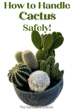 Do you know how to handle cactus safely, without getting stuck or poked by sharp cactus spines? Learn the exact tools, tips and tricks I use to plant and care for cactus without getting hurt! Touching cactus doesn't have to hurt! :) #cactuscare #touchingcactus #howtohandlecactus #cactuscaretips Small Cactus, Cactus Plants, Succulent Arrangements, Succulents, Cactus Care, Cool Shapes, Handle, Cacti, Cactus
