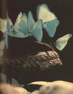 """""""I drowned a butterfly once. He asked me to. They cried for it with their strange blue wings. Aesthetic Images, Aesthetic Photo, Aesthetic Art, Aesthetic Wallpapers, Arte Van Gogh, Arte Indie, Arte Obscura, Paolo Roversi, Santa Lucia"""
