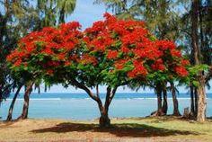 La Réunion se situe dans l'hémisphère sud, son climat est tropical. � À la Réunion , il y a 2 saisons , l'hiver austral et l'été austral : l'été...