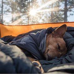 Sweet doggo dreams. #campingwithdogs @robinventures