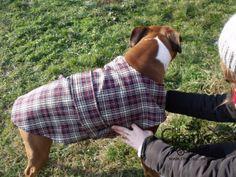 tutorial come fare cappottino cane fai da te 16