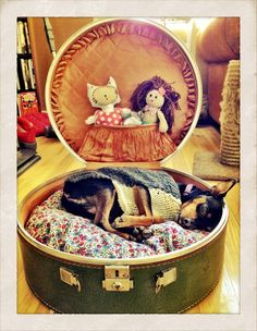Dog / cat bed made from a vintage suitcase. Cute Dog Beds, Puppy Beds, Diy Dog Bed, Pet Beds, Doggie Beds, Dog Furniture, How To Make Bed, Diy Stuffed Animals, Pet Accessories