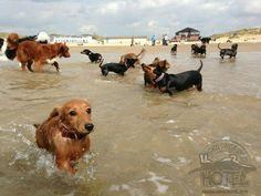 Love Sausage Dog Hotel!  This looks like a fun outing at the beach!
