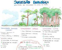 Mapa Mental: Sucessao Ecologica