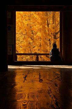 宮島千畳閣 Miyajima, Hiroshima, Japan #AutumnLeaves