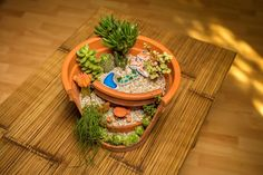 Decoratiune plante naturale, suculente