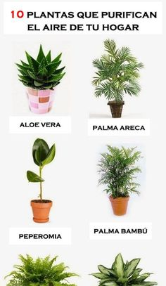 """"""" 10 House Plants That Clean Indoor Air""""💯Plz like👍 before saving Thank u😄 Air Cleaning Plants, Air Plants, Indoor Plants Clean Air, Indoor Garden, Vegetable Garden, Aloe Vera, House Plants Decor, Bedroom Plants, House Cleaning Tips"""