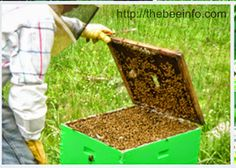 Online Classes On Beekeeping Certificate Program. Online classes are getting popularity rapidly because people can manage money but unable to spare time....