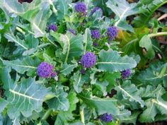 New vegetable seeds for my choice Growing Vegetables, Fruits And Vegetables, Broccoli, Seeds, Posts, Garden, Blog, Messages, Garten