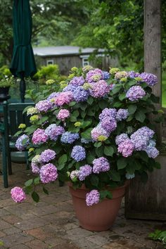 6 Untraditional Container Plants Source by Related posts: 12 Best Patio Plants For Container Gardening 16 ideas for easy… Patio Plants, Outdoor Plants, Plants In Pots, Outdoor Flower Planters, Best Potted Plants, House Plants, Outside Plants, Outdoor Flowers, Pot Jardin