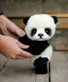 baby pandas Cute Baby Animals That Will Make You Go AwwJoin us to protect to know Mosiyeef fundrasing plan, You buy, We donate. Cute Panda Baby, Baby Panda Bears, Baby Animals Super Cute, Cute Baby Dogs, Cute Stuffed Animals, Cute Little Animals, Cute Funny Animals, Cute Puppies, Baby Pandas