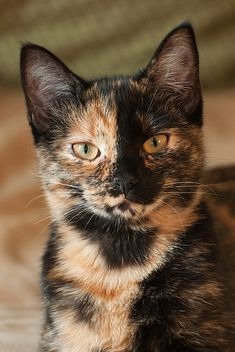 Such cool markings! Sweet! Tortie