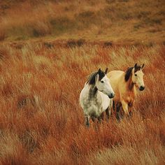 """In 1971, the United States Congress recognized that """"wild free-roaming horses and burros are living symbols of the historic and pioneer spirit of the West, which continue to contribute to the diversity of life forms within the Nation and enrich the lives of the American people."""""""