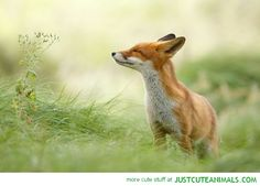 cute animals wild wildlife species planet earth nature pics pictures photos images