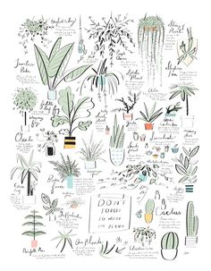 UncommonGoods Plant Poster