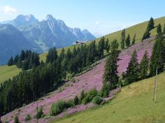 Summer in Gstaad, Switzerland - Come up slow down.