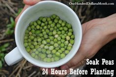 Garden Tip – Soak Your Seeds Before Planting Them