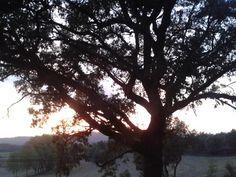 res millor q acabar el dia gaudint d la posta de sol des d'#alpens sota el #rouredelcolomer  @montsebarniol Connect, Celestial, Sunset, Nature, Outdoor, Sunsets, Outdoors, Naturaleza, Outdoor Games