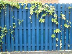 Fence Treatment Blue Wood Stain Diffe Types Of Fences Gate Fencing Backyard Ideas Outdoor Es