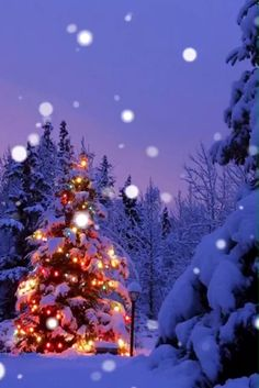 ❄ 20 Magical, Snowy, Animated Christmas Scenes To Start Getting You In The Holiday Mood Christmas Tree Gif, Magical Christmas, Christmas Scenes, Christmas Mood, Christmas Music, Country Christmas, Christmas Wishes, Christmas Pictures, Christmas Greetings