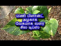 Garden Tips, Plant Hanger, Vegetable Garden, Gardening, Make It Yourself, Youtube, Plants, Diy, Bricolage