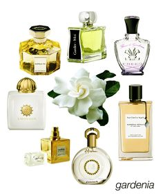 Swoon-worthy Gardenias: Rappelle-Toi. Gardez-Moi, Fleur de Gardenia, Gardenia Petale, Gardenia from M. Micallef, Gardenia from Isabey, and Honour Woman. #niche #perfume #luckyscent