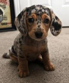 The cutest puppy ever!