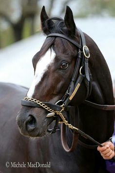 Racehorse - Honor Code