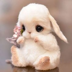 Que hermoso ❤❤ - Animales adorables Baby Animals Super Cute, Cute Baby Bunnies, Cute Stuffed Animals, Cute Little Animals, Cute Funny Animals, Cute Cats, Bunny Bunny, Baby Animals Pictures, Cute Animal Photos