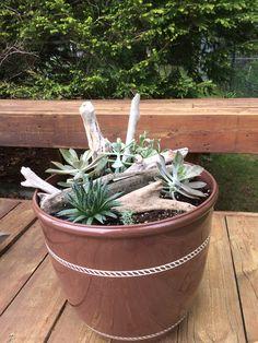 Succulent beach pot