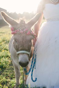 wedding donkey with floral crown // Britt Croft Photography // The Lovely Find