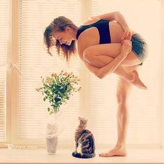 #kitty #yoga #cat