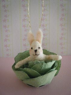 bunny in cabbage
