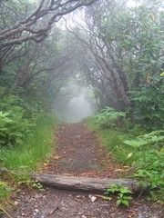 Panoramio - Photo of Craggy Pinnacle Trail - Foggy Trail