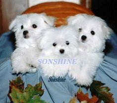 Sonshine acres  http://www.sonshineacres.com