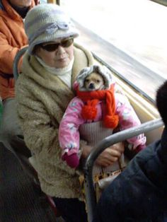 Dog who is ready for a long, cold commute. | 35 Dogs That Will Make Your Day Instantly Better