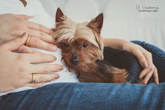 Sweet little dog is listening for a baby knock. Interesting idea for pregnant photo shoot