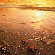 America's Happiest Seaside Towns | 3. Sanibel Island, Florida | CoastalLiving.com