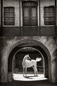 Arabian Gate by Jamal Alayoubi. ~ Gorgeous photo with a lovely horse.  I really like the black and white and the building in the shot.  Very atmosphere enhancing